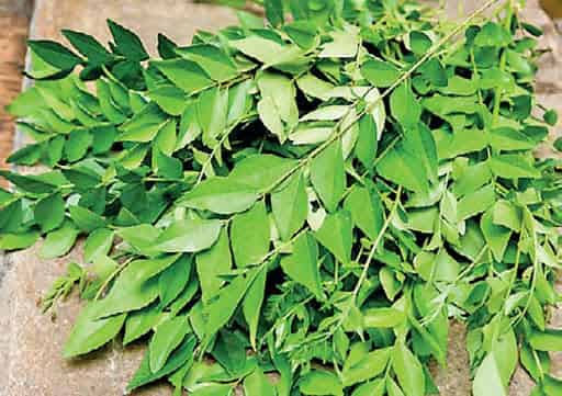 benefits of curry leaves to remove early grey hair