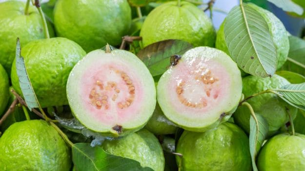 guava- updatenews360