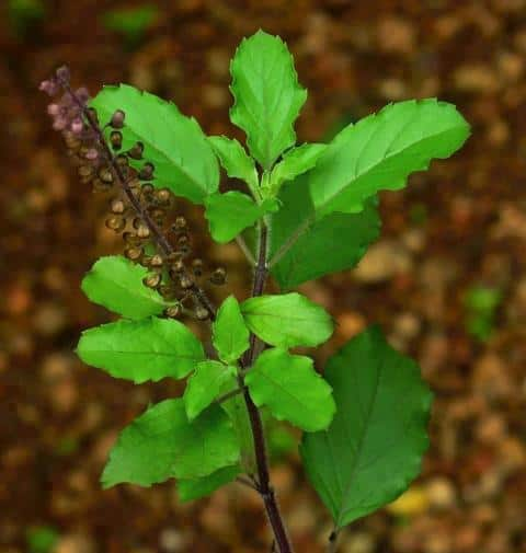 herbal brew updatenews360