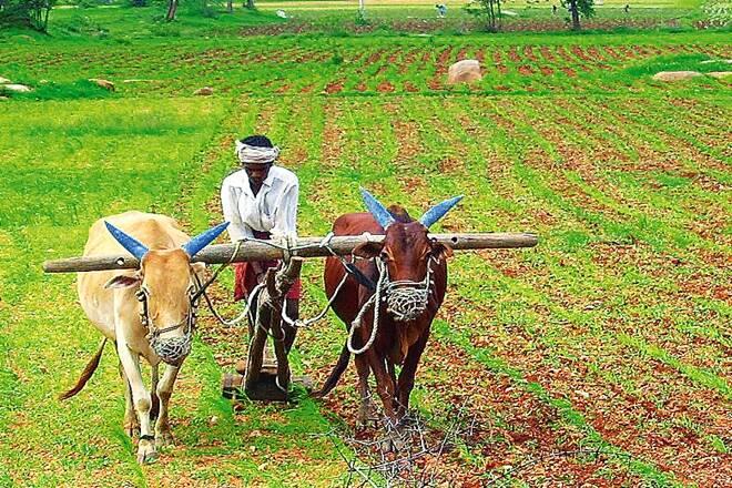 Agriculture_UpdateNews360