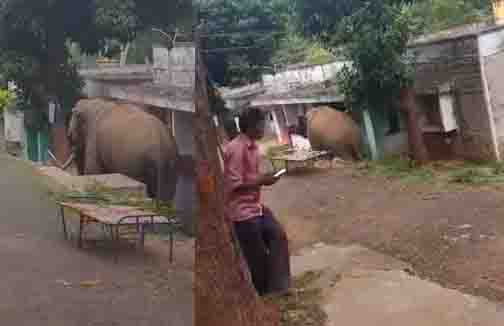 Elephant Roam- Updatenews360