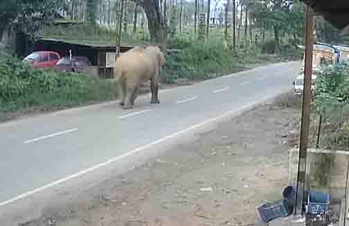 Elephant Roaming - Updatenews360