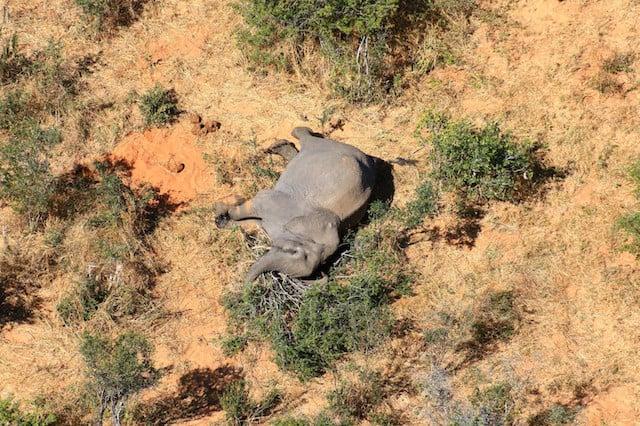 Elephant_Mass_Death_UpdateNews360