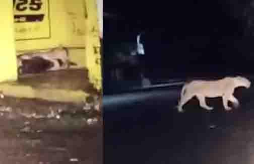 Gujarat Lion- Updatenews360