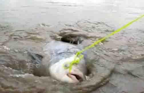 Hogenakkal Fish - Updatenews360