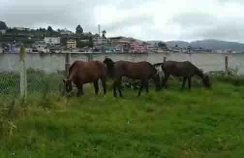 Horse - Updatenews360