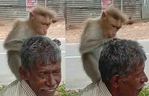 Mtp Monkey - Updatenews360