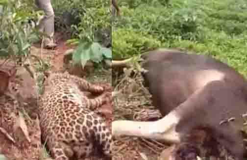 Nilgiri Animals Fight - Updatenews360-Recovered