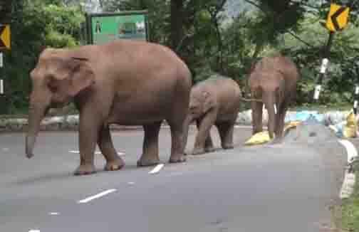 Ooty Elephant - Updatenews360