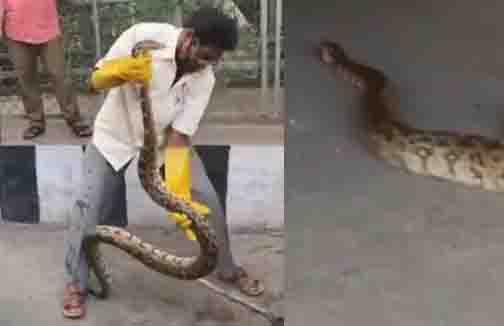 Tirupati Python- Updatenews360