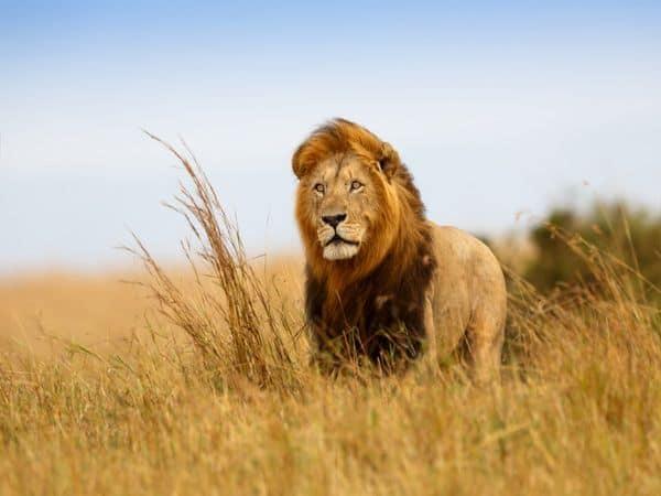 World_Lion_Day_UpdateNews360