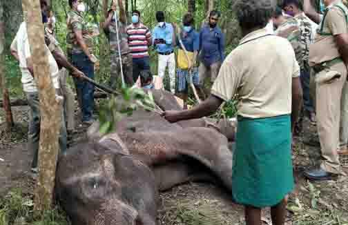 cbe Elephant Dead - Updatenews360