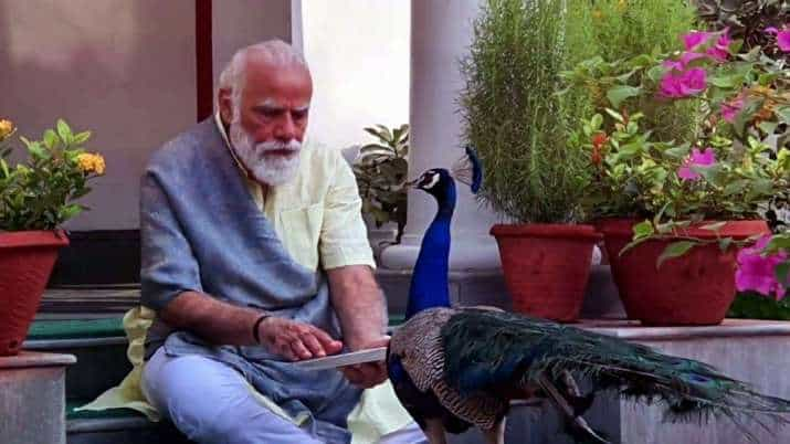 modi_peacocks_UPDATENEWS360