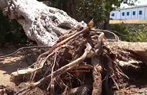 Banyan Tree - Updatenews360