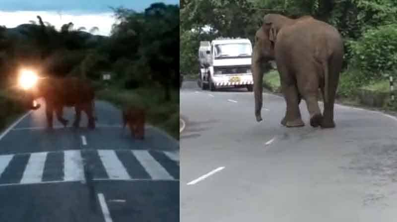 Elephants Roaming - updatenews360