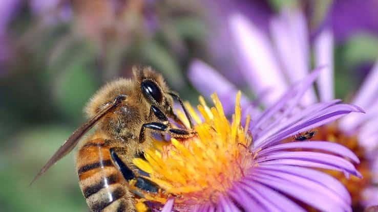 Honey - Updatenews360