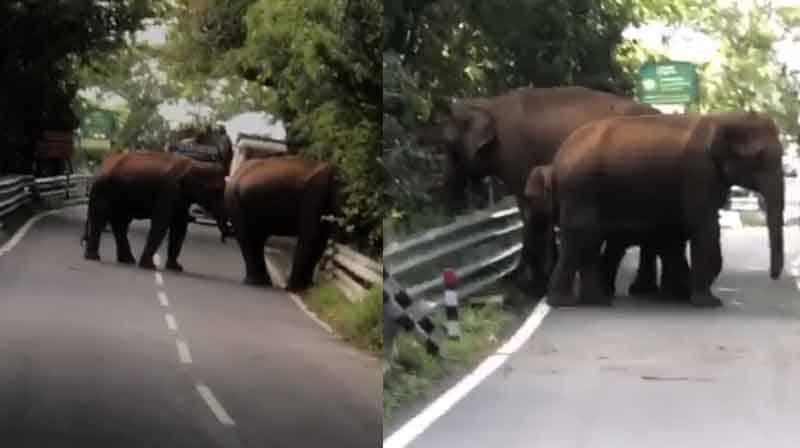 MTp Elephants- updatenews360