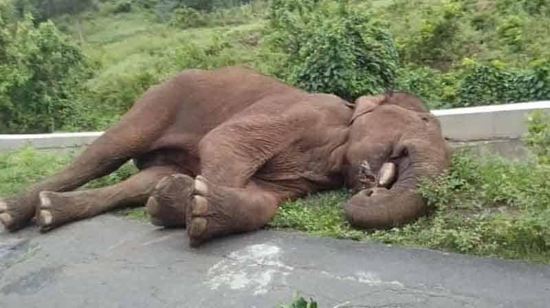 Magna Elephant - updatenews360