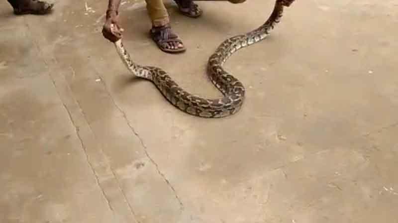 Python Rescue - updatenews360