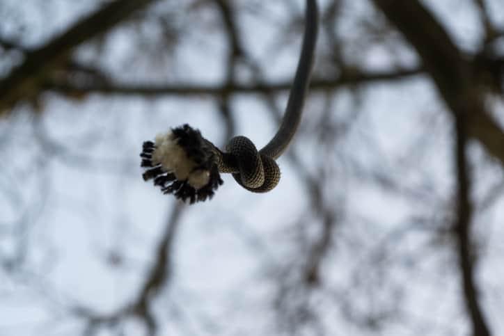 Tree_hanged_Death_UpdateNews360