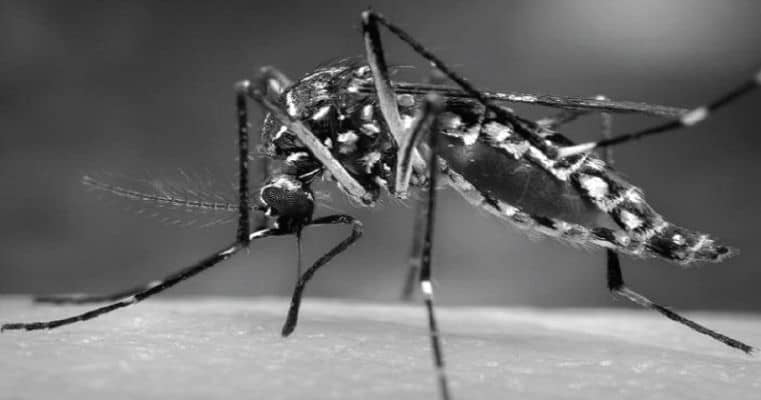 Brave scientist feeds himself to infected mosquitoes for science