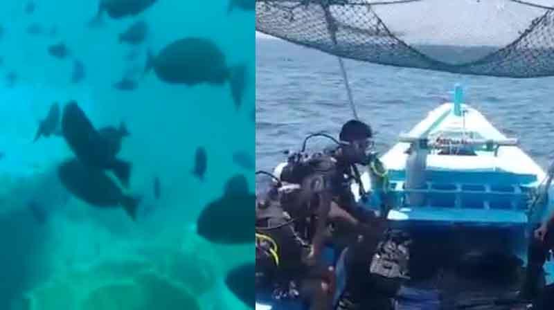 Clear Sea - updatenews360