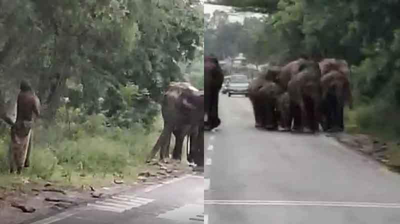 Elephant Escape - Updatenews360