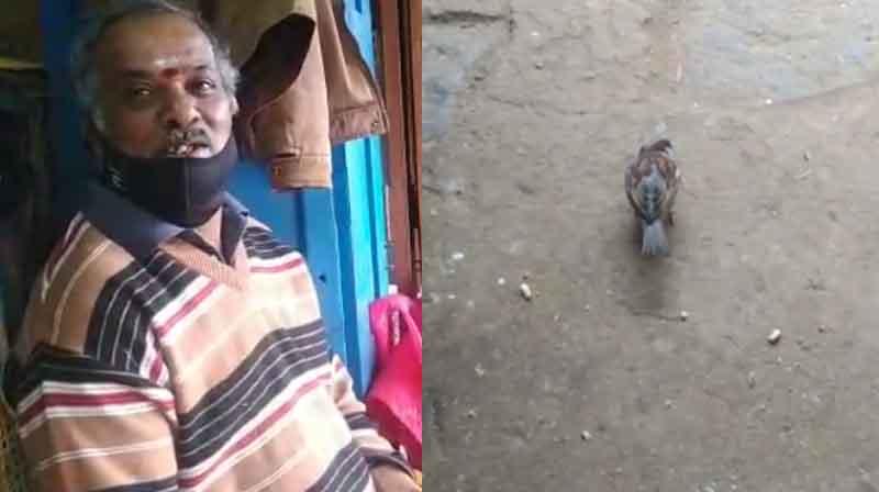 Ooty Sparrow - Updatenews360
