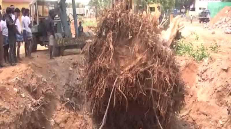 Pipal Tree - Updatenews360
