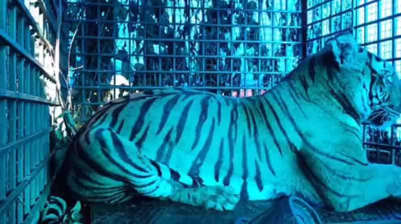 Tiger- Updatenews360
