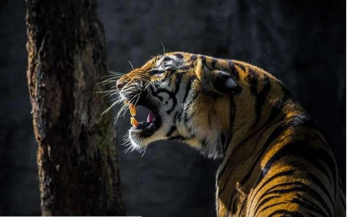 Tiger_UpdateNews360