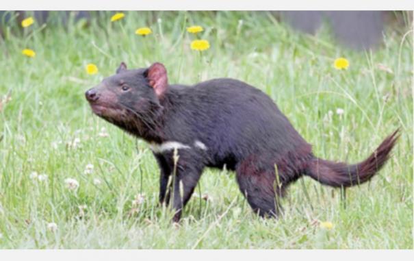 australia animal - updatenews360