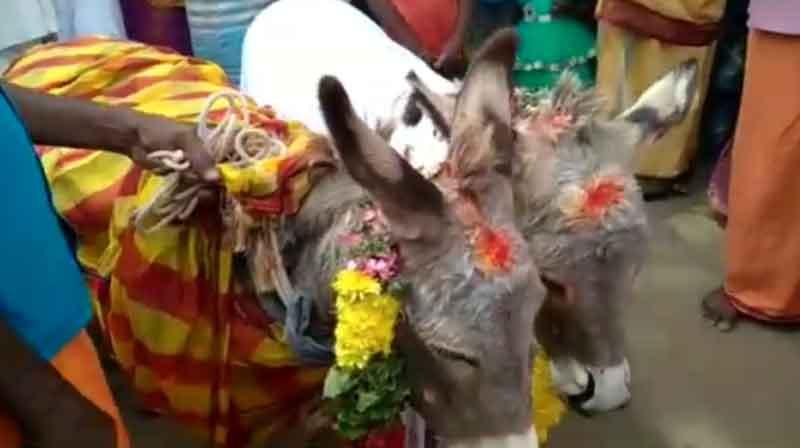 donkey Marriage- Updatenews360