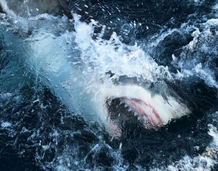shark_updatenews360