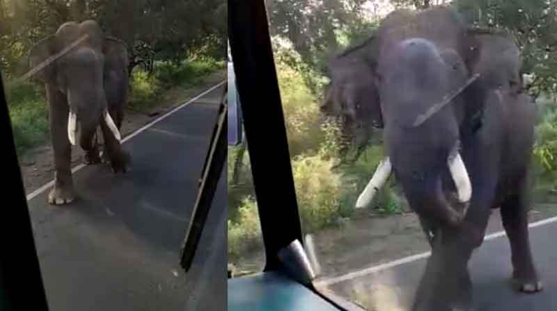 Elephant- Updatenews360