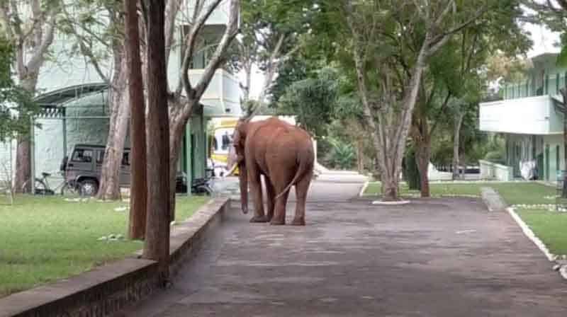 Elephant - Updatenews360