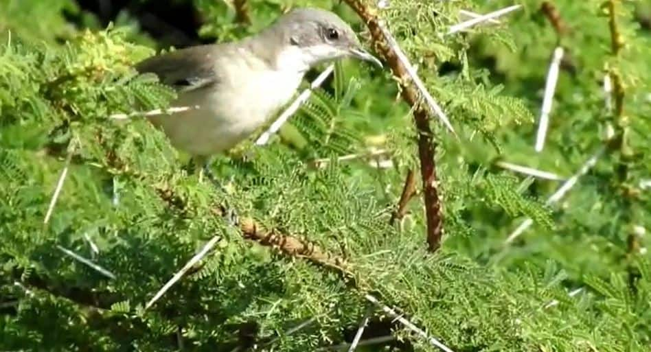 bird 4 - updatenews360