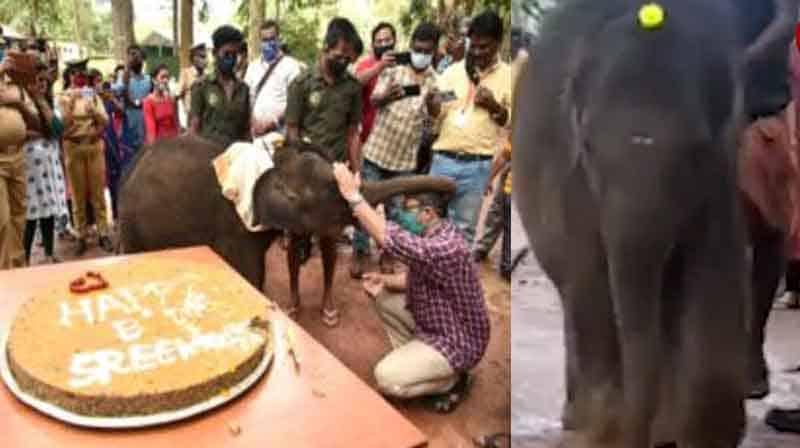 elephant Bday - Updatenews360