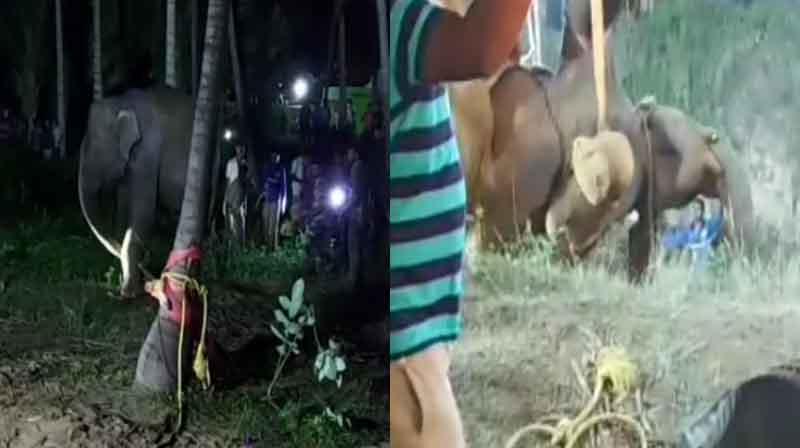 elephant Saved - Updatenews360