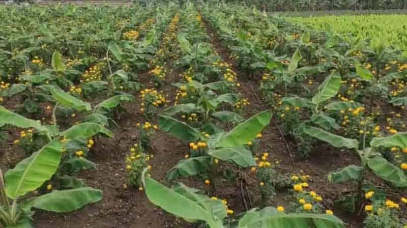 farmer Happy - Updatenews360