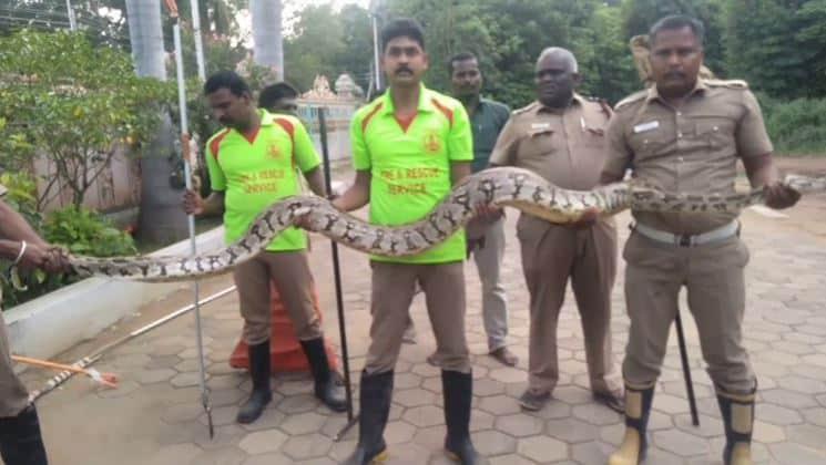 pazhani snake - updatenews360