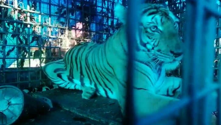 tiger - updatenews360
