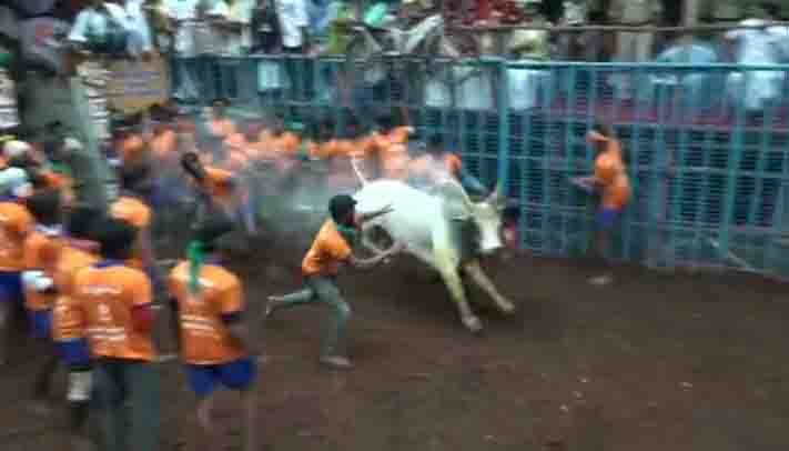 Avaniapuram Jallikattu- Updatenews360