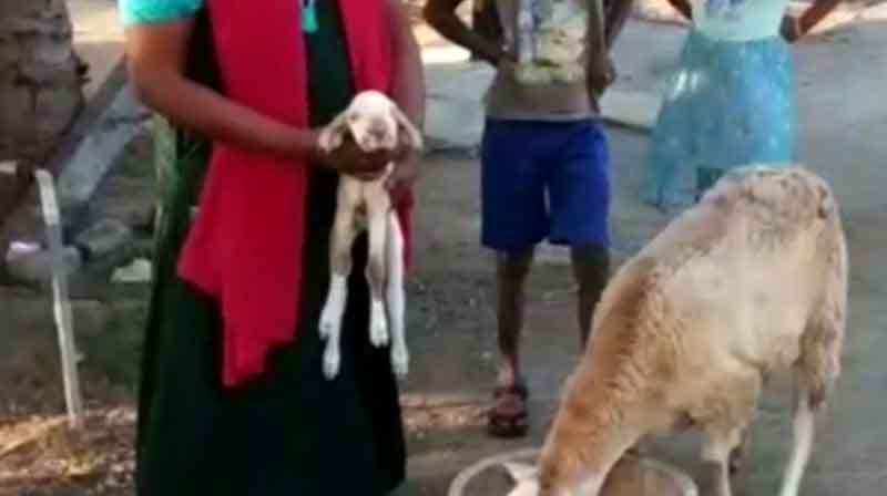 Different Goat - Updatenews360