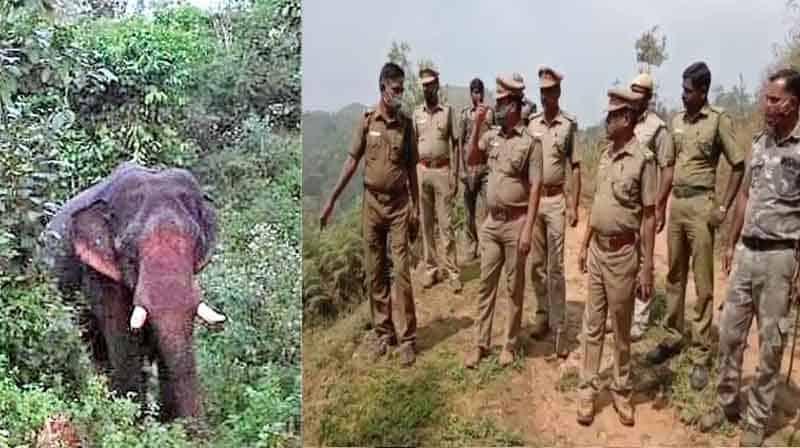 Nilgiri Elephant - Updatenews360