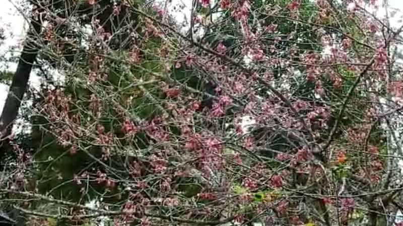 Ornamental plant - Updatenews360