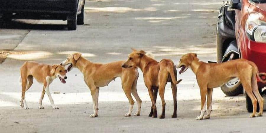 Stray_Dogs_UpdateNews360