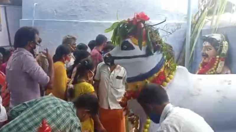 Tirupur Cow temple -Updatenews360