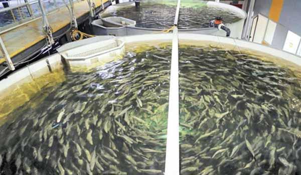 artificial fish tank - updatenews360
