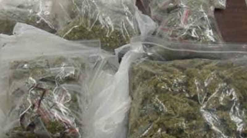 cannabis -Updatenews360